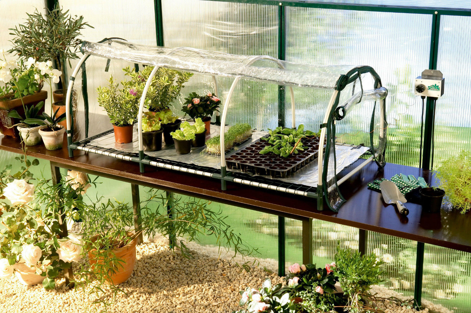 Jumbo pflanzen aufzuchtstation heizmatte thermostat bio for Green pflanzen